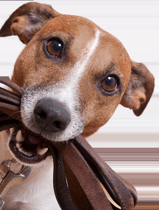 Piracema Corretora de Seguros - Seguro Animal